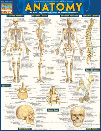 Cover Image For Anatomy Barchart