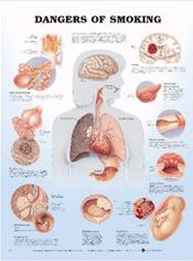 Image For ANATOMICAL DANGERS OF SMO