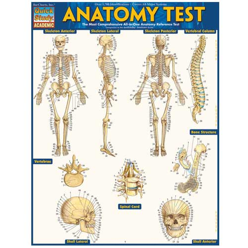 Image For Anatomy Test-BarChart