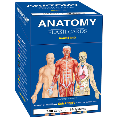 Image For Anatomy Flash Cards