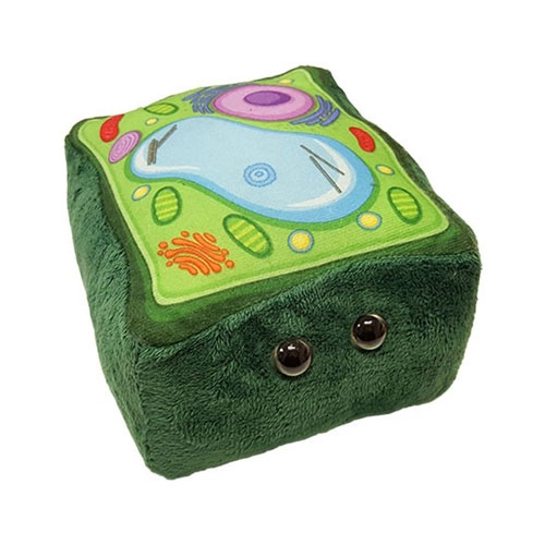 Image For Plant Cell