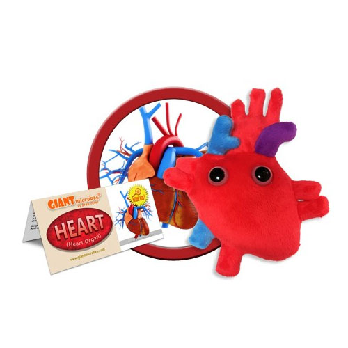 Image For Heart Organ