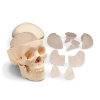 Image for Human Skull Model With Eight-Part Brain
