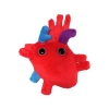 Image for Heart Organ Giant Microbes