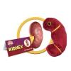 Image for Kidney Organ